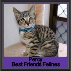 2017 - Adopted - Percy