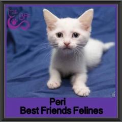 2017 - Adopted - Peri