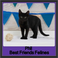 2017 - Adopted - Phil