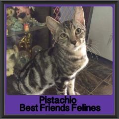 2017 - Adopted - Pistachio