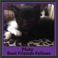 2017 - Adopted - Pluto