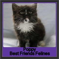 2017 - Adopted - Poppy (2)