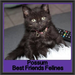2017 - Adopted - Possum