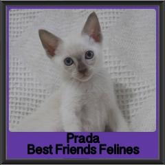 2017 - Adopted - Prada