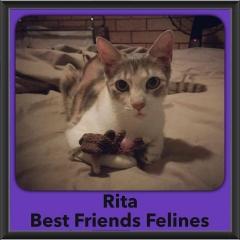 2017 - Adopted - Rita
