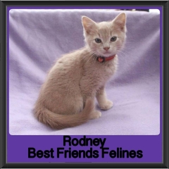 2017 - Adopted - Rodney