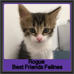 2017 - Adopted - Rogue