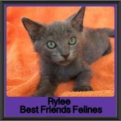 2017 - Adopted - Rylee