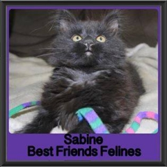 2017 - Adopted - Sabine