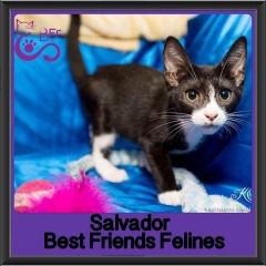 2017 - Adopted - Salvador