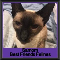 2017 - Adopted - Samorn