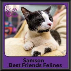 2017 - Adopted - Samson