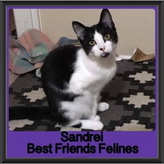 2017 - Adopted - Sandrei