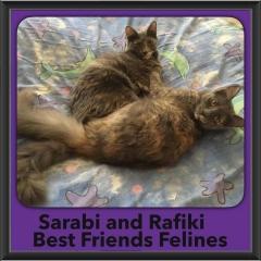 2017 - Adopted - Sarabi & Rafiki
