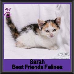2017 - Adopted - Sarah