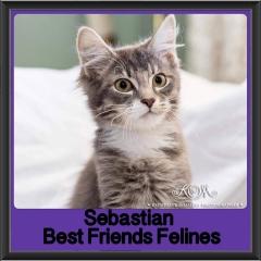 2017 - Adopted - Sebastian
