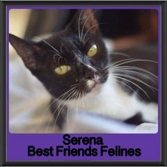 2017 - Adopted - Serena