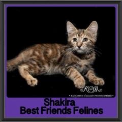 2017 - Adopted - Shakira
