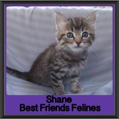 2017 - Adopted - Shane