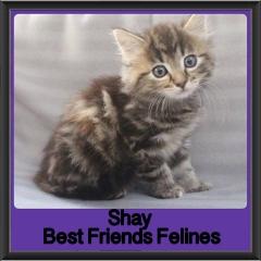 2017 - Adopted - Shay