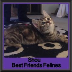2017 - Adopted - Shou