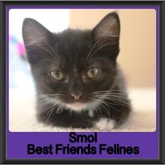 2017 - Adopted - Smol