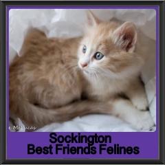 2017 - Adopted - Sockington