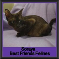 2017 - Adopted - Soraya