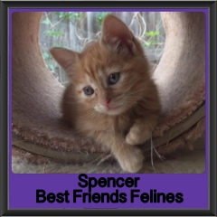 2017 - Adopted - Spencer