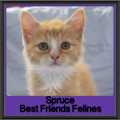 2017 - Adopted - Spruce