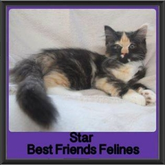 2017 - Adopted - Star