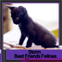 2017 - Adopted - Storm
