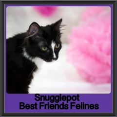 2017 - Adopted - Suogglepot