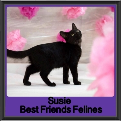 2017 - Adopted - Susie