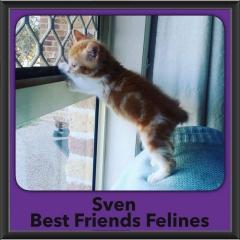 2017 - Adopted - Sven