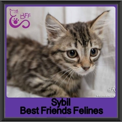 2017 - Adopted - Sybil