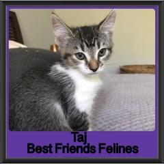 2017 - Adopted - Taj