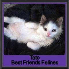2017 - Adopted - Tato