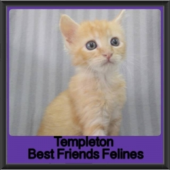 2017 - Adopted - Templeton