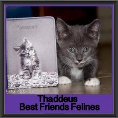 2017 - Adopted - Thaddeus