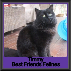 2017 - Adopted - Timmy