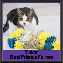 2017 - Adopted - Tinker