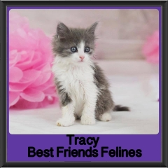 2017 - Adopted - Tracy