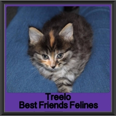 2017 - Adopted - Treelo