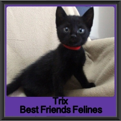 2017 - Adopted - Trix