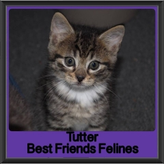 2017 - Adopted - Tutter