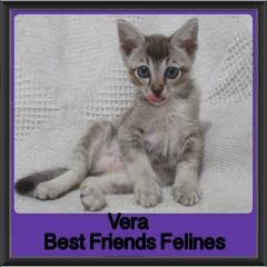 2017 - Adopted - Vera
