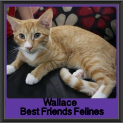2017 - Adopted - Wallace