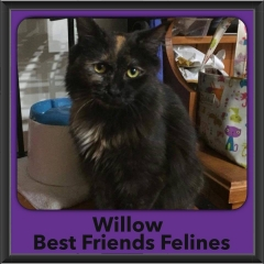 2017 - Adopted - Willow
