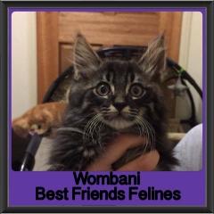 2017 - Adopted - Wombani